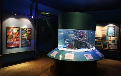 Aquarium Marine Museum Kota Kinabalu Sabah Tourist