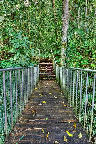 Crocker Range National Park Sabah Tourist Travel Guide Malayisia